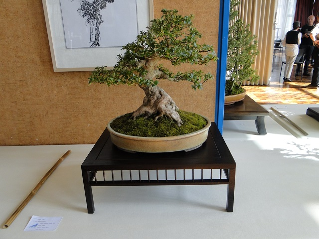 la passion du bonsai - Page 5 Dsc06227
