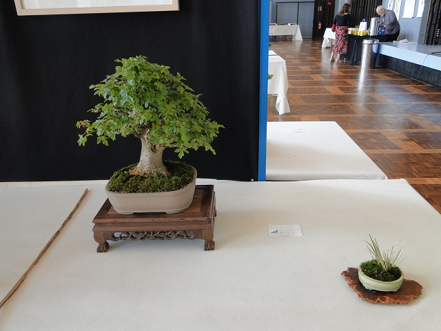 la passion du bonsai - Page 5 Dsc06229