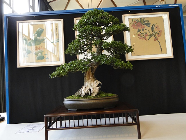 la passion du bonsai - Page 6 Dsc06235