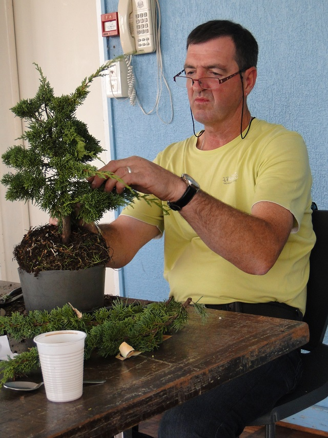 la passion du bonsai - Page 6 Dsc06236