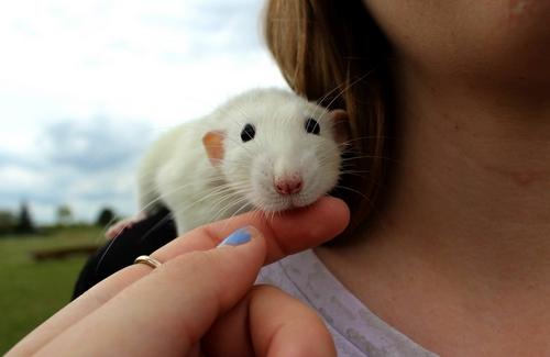 Lisa et ses 7 ratons 10269210