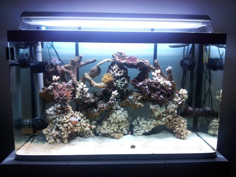 Aquarium de Samix  - Page 6 20130712