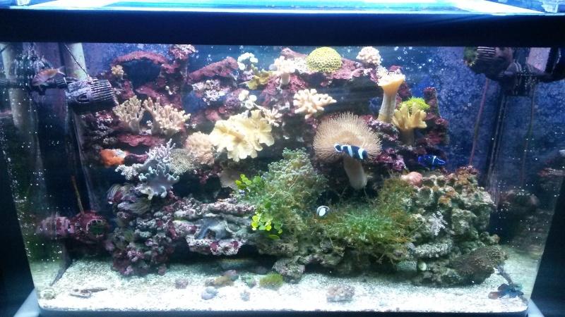 Aquarium de Samix  - Page 6 20140610