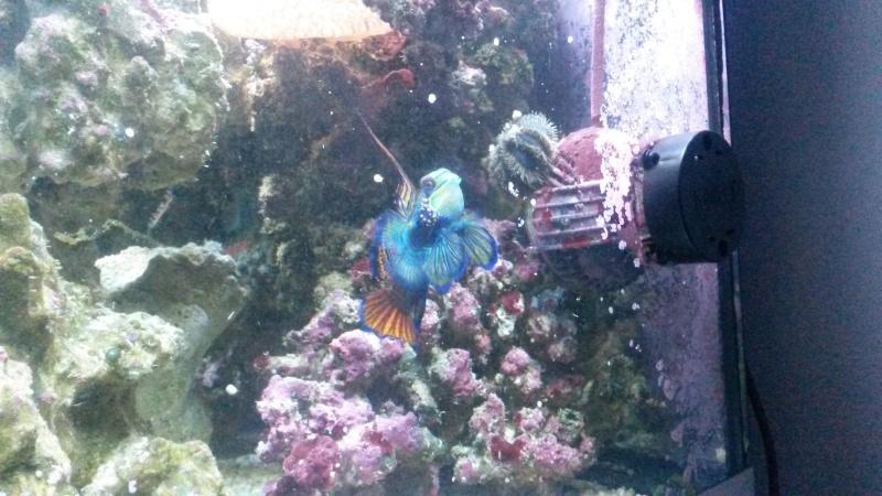 Aquarium de Samix  - Page 6 20140611