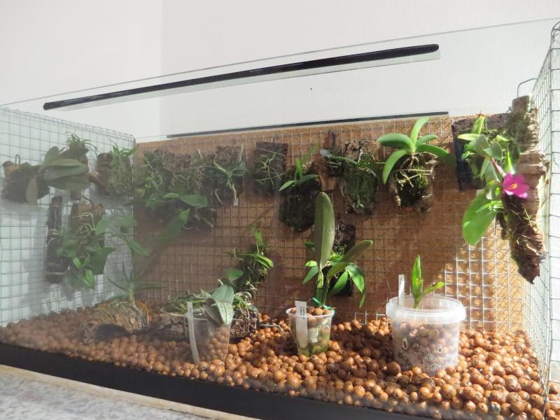 Umbau kleines Aquarium zum Orchidarium 2014-123
