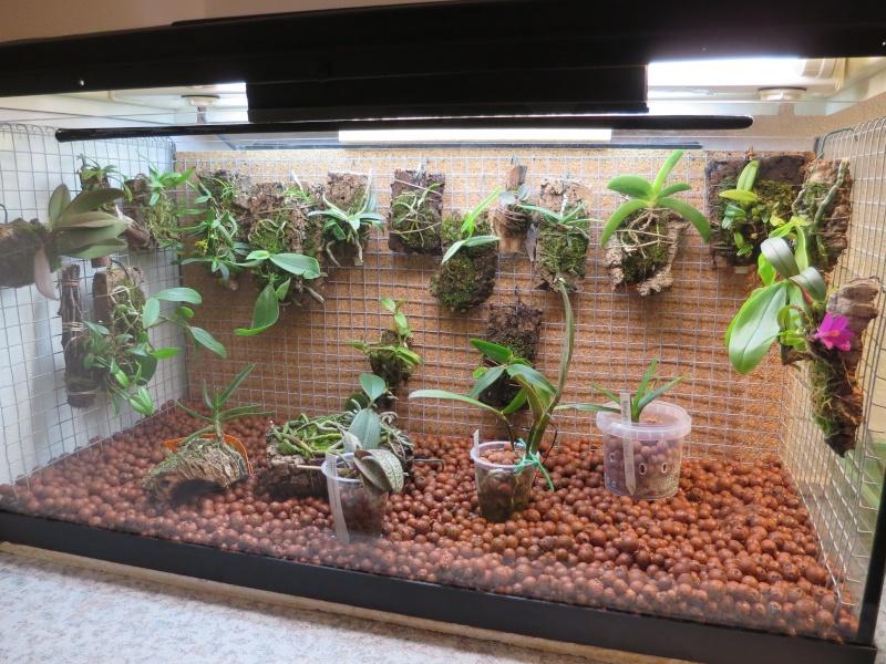 Umbau kleines Aquarium zum Orchidarium 2014-124