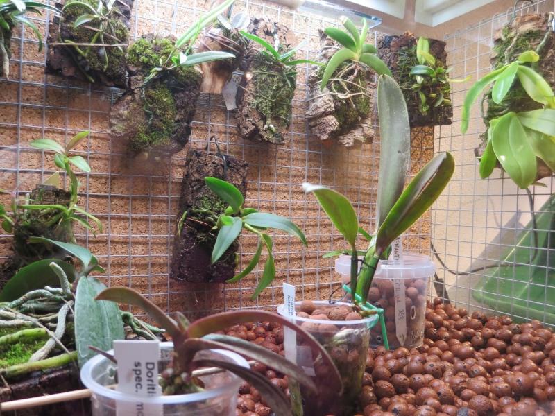 Umbau kleines Aquarium zum Orchidarium 2014-126