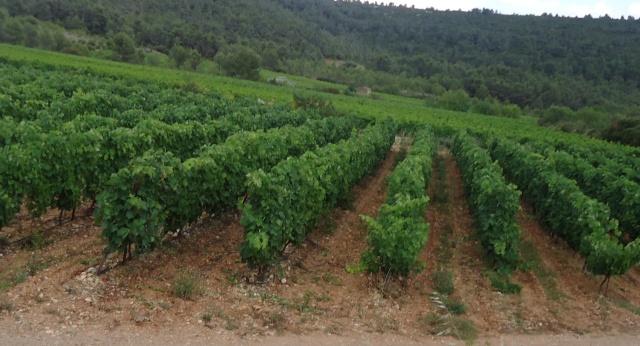 orage de grêle sur l Aude 10 jours après  04213