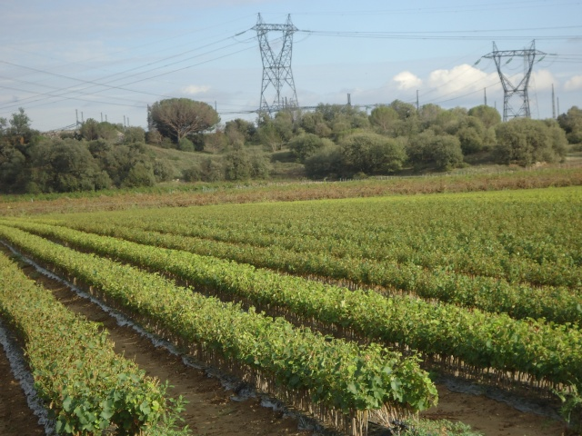 orage de grêle sur l Aude 10 jours après  Dsc02313