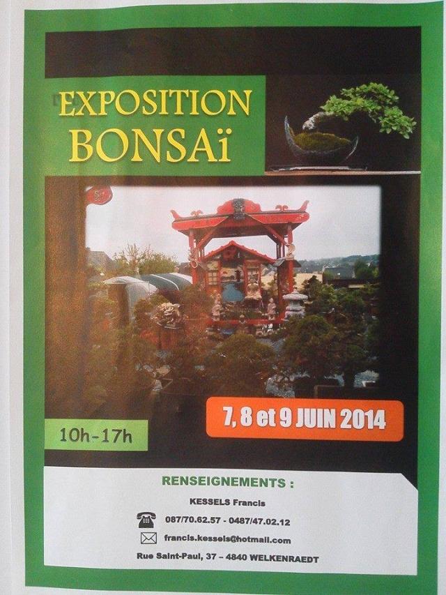 Bonsaï - Page 2 Bonsaa10