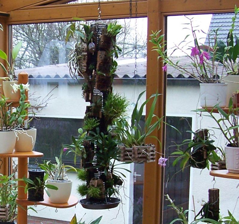 Miniatur- Orchideen - Seite 24 Bc_win10