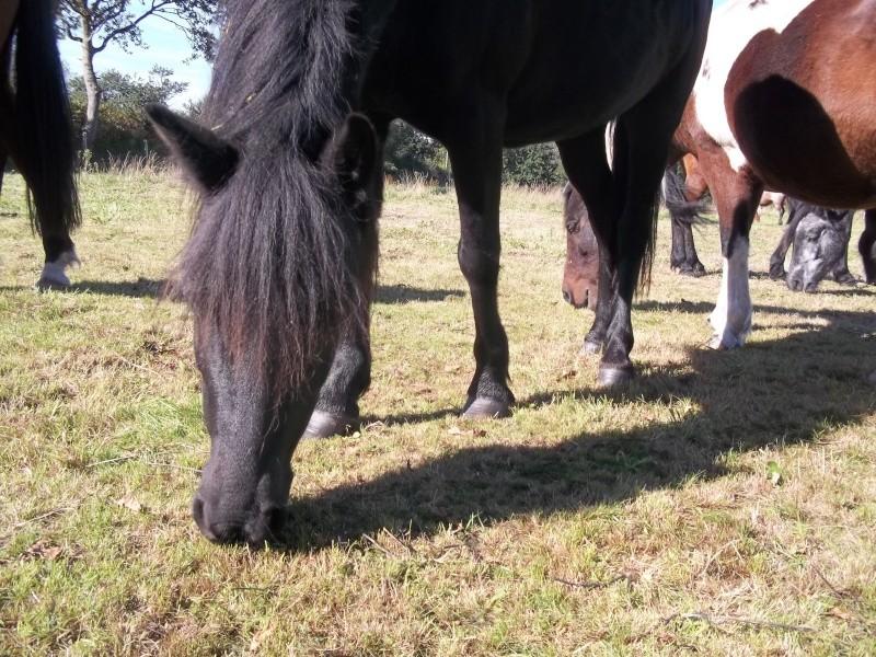 Présentez-nous vos chevaux ! <3 6_octo10