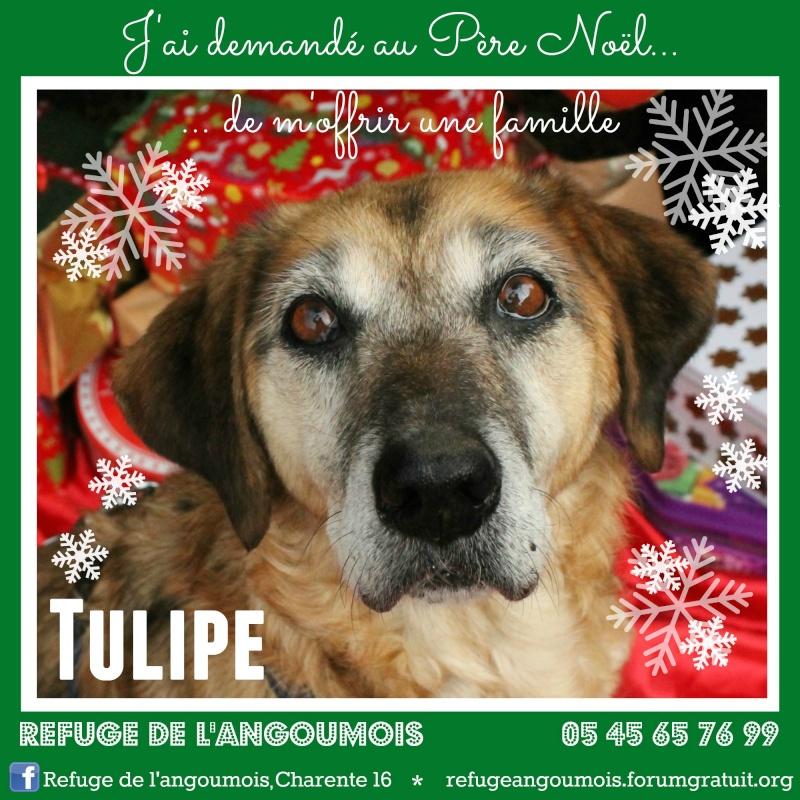 Calendrier de l'Avent 2014 Tulipe14
