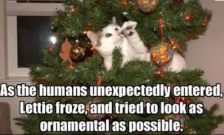 Your Christmas pics from around the globe - Page 2 Cats-i10