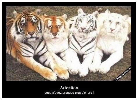Rire en cascade - Page 3 Tigren10