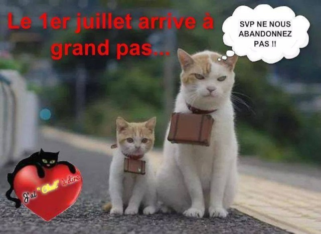 Chat alors! - Page 17 10341410