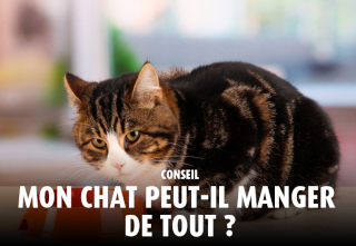 Chat alors! - Page 17 Chatal10