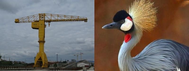 En-crane or Fr-grue: who's right? Temp180