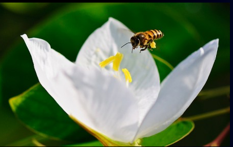 Saving the bees Temp675