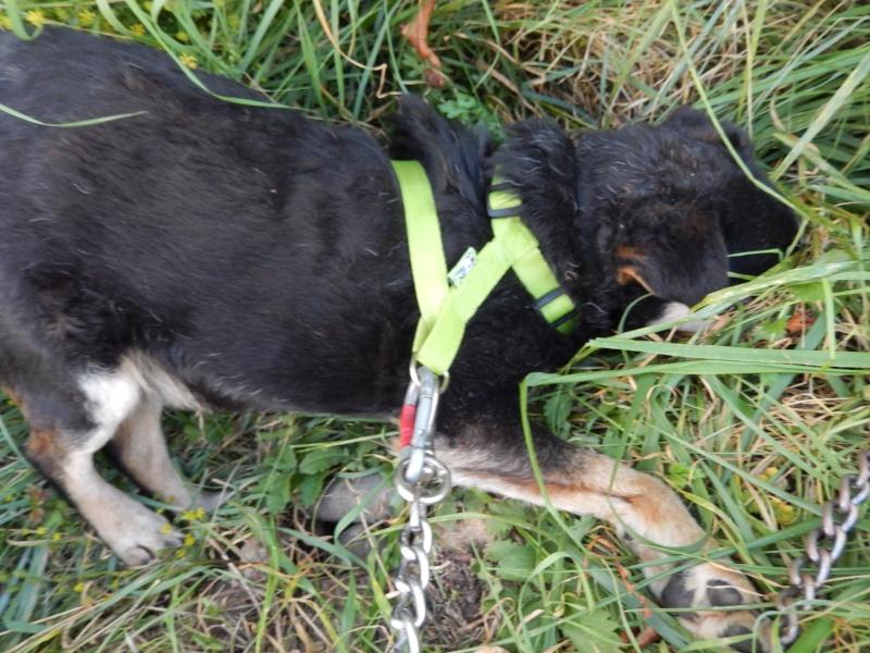 PAPY (mâle type jagd terrier) - Candidat FA Dscn4911