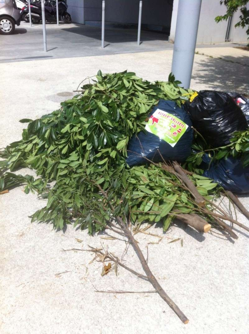 Gestion des déchets verts dans le quartier - Compost - Compostage Img_1810