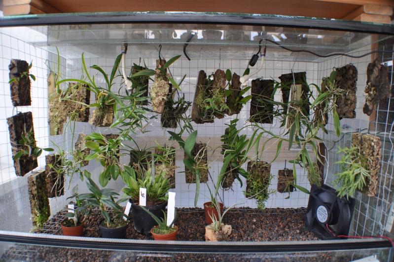 Terrarium zur Pflanzenkultur Dsc_0026