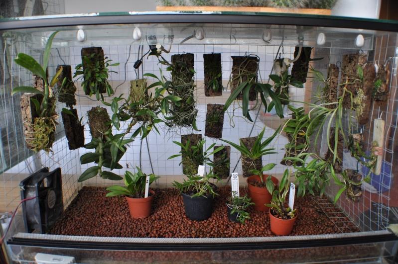 Terrarium zur Pflanzenkultur Dsc_0027