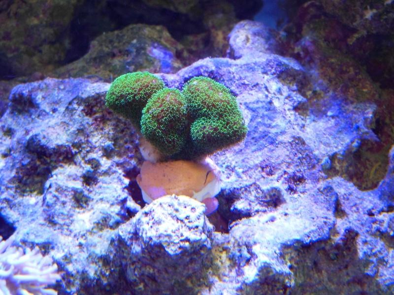 vos plus vieux coraux Dscn2229