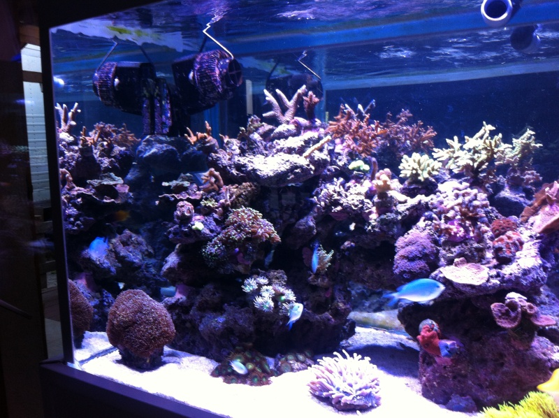 THE BILLY'S REEF - Page 2 Img_0311