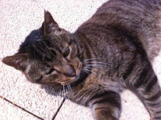 Les mamies et papis chats à l'adoption :) - Page 2 Img_0210