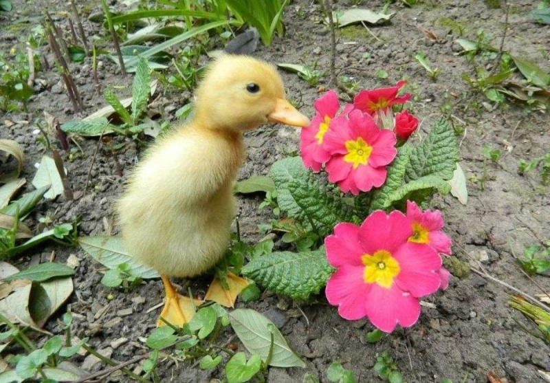 pour les amoureux des animaux Poussi10