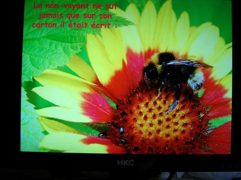 ne faites pas toujours la fourmis 00815