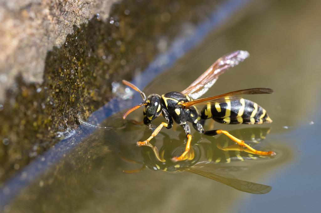 Macros/  proxi/  insectes  42143510