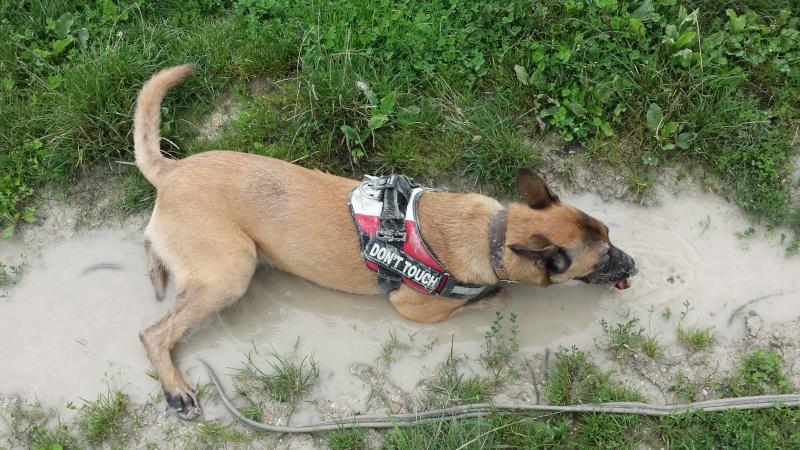 Vos chiens et leurs harnais! Photo  - Page 5 20140812