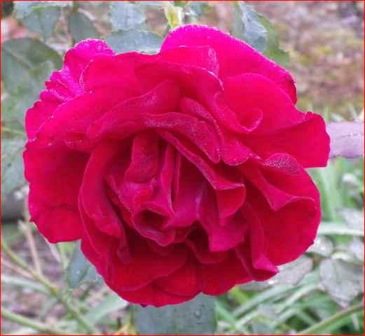 'Red Parfum' !!! 08082011