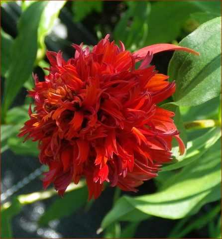 Plantarium de Gaujacq -40- !!! 10082018