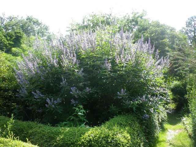 Plantarium de Gaujacq -40- !!! 10082019