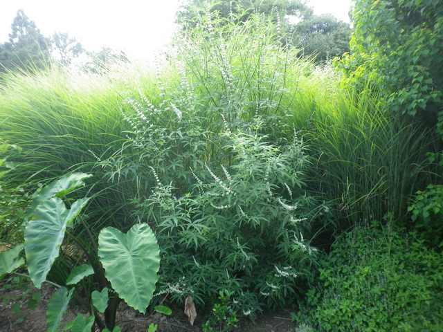 Plantarium de Gaujacq -40- !!! 10082020