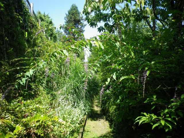 Plantarium de Gaujacq -40- !!! 10082022