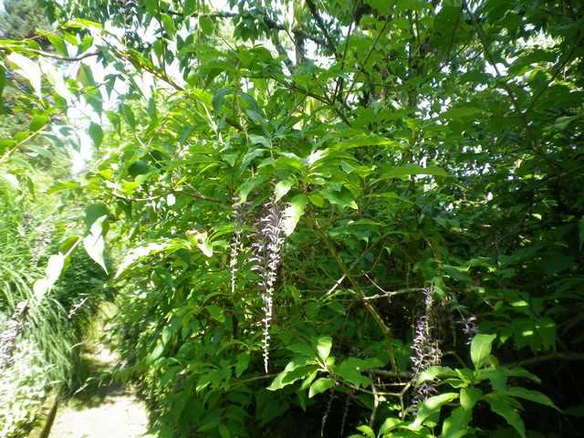 Plantarium de Gaujacq -40- !!! 10082023