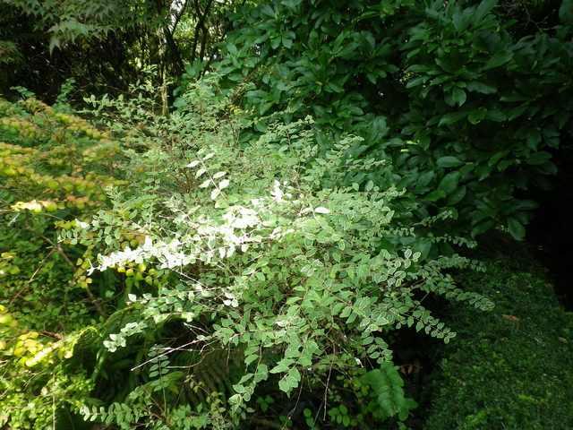 Plantarium de Gaujacq -40- !!! 10082026