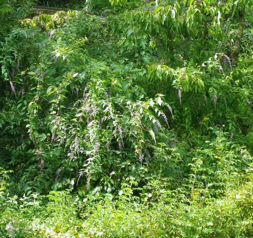 Plantarium de Gaujacq -40- !!! 10082027