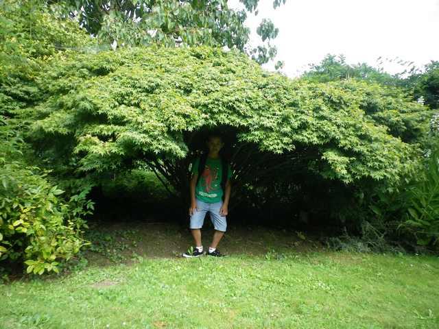 Plantarium de Gaujacq -40- !!! 10082028