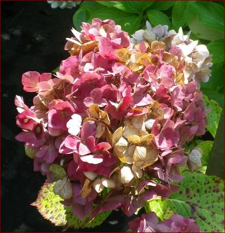 Plantarium de Gaujacq -40- !!! 10082032