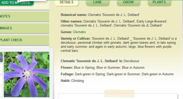 Plantarium de Gaujacq -40- !!! Clemat11