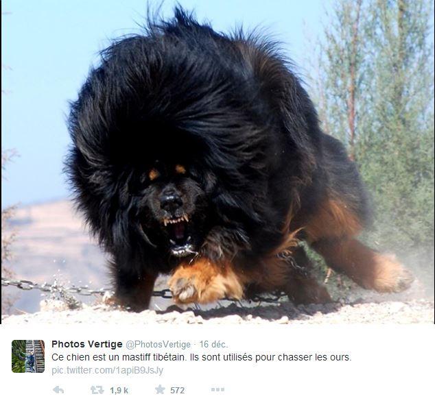 LE BAR A PHOTOS ET VIDEOS : insolites, drôles, émouvantes - Page 2 Captur73