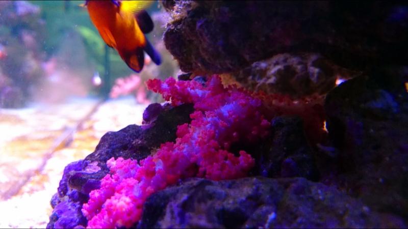 juwel rio eau de mer  Dsc_1010