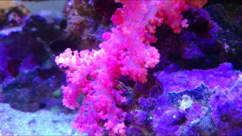 juwel rio eau de mer  Dsc_1011