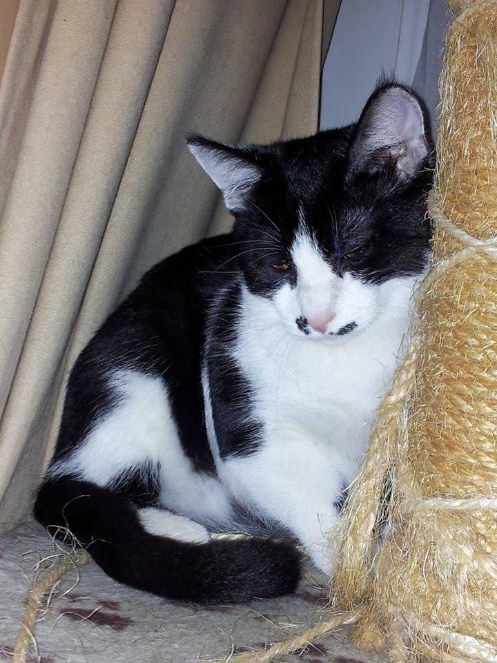 Mikado, noir et blanc, né en Mars 2014  10533410