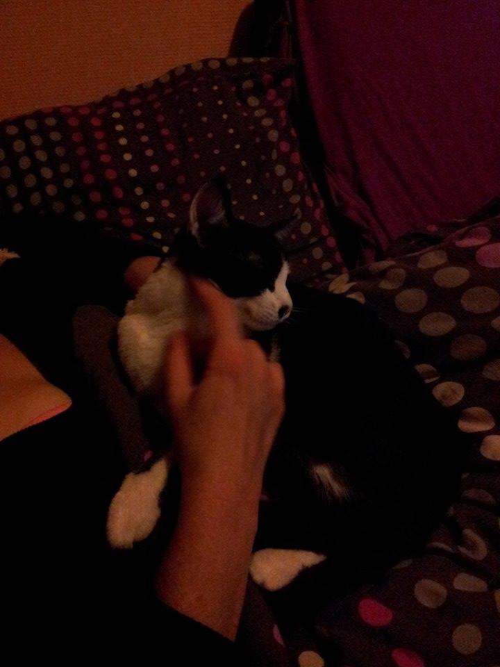 Mikado, noir et blanc, né en Mars 2014  10570510